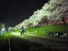 タイ古式マッサージサロン 『Chai(チャイ)』 スタッフ日記-幸手の桜