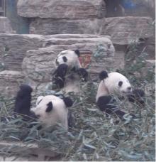 タイ古式マッサージサロン 『Chai(チャイ)』 スタッフ日記-panda