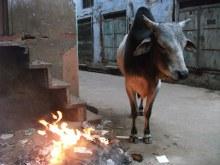 タイ古式マッサージサロン 『Chai(チャイ)』 スタッフ日記-焚き火牛
