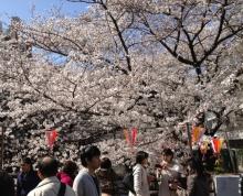 タイ古式マッサージサロン 『Chai(チャイ)』 スタッフ日記-桜3