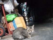 タラートプルー猫