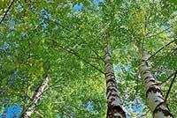 tree_woods_00009